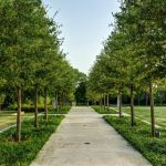 Health benefits of landscaping